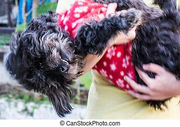 Black shaggy dog, Mixed-Breed