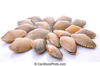 Soft Shell Clams - Fresh soft shell clams over white...