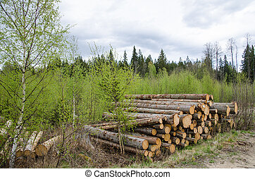 Logpile at spring - Spruce logpile surrounded of green...