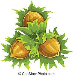 Cluster of ripe hazelnuts
