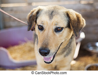 Dog portrait - A dog in an animal shelter, waiting for a...