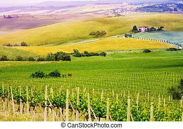 Vineyard in Tuscany landscape, Italy - Vineyard view in...