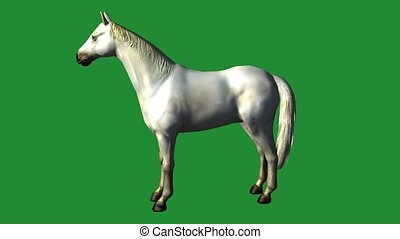White horse foal pet,farm animal wild lifebeautiful spirit