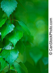fresh foliage - selective focus on left part of photo (...