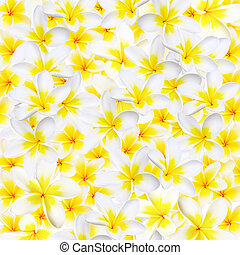 Plumeria Background - Full-frame background of plumeria or...