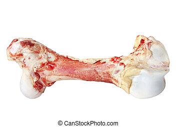 Dog Bone - Large meaty dog bone, isolated on white