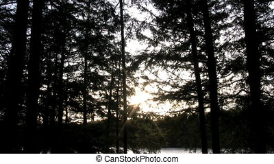 forest sunset - footage of sunset through trees
