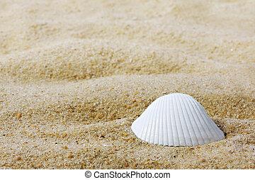 Seashell - Single white seashell on sand. Lots of copy...