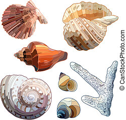 Set of Sea Shells And Coral Vector illustration