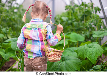Little cute girl with the harvest in a greenhouse - Little...