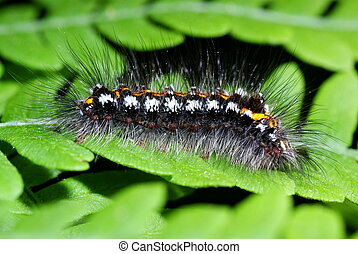 caterpillar - shaggy colourful caterpillar on green fern in...