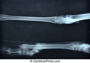 x ray picture of wild animal skeleton