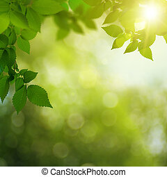 Beauty summer day in the forest, abstract environmental backgrounds