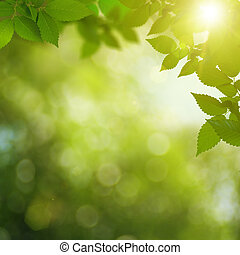 Summer garden abstract environmental backgrounds
