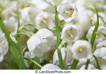 flowers lily of the valley closeup horizontal