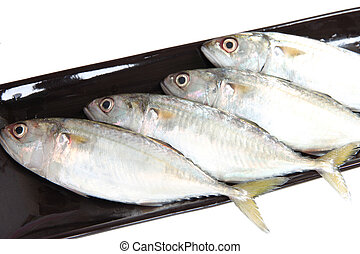 fresh mackerel in black plate - fresh mackerel in black...
