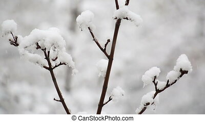 snow-covered branch of tree against background of snow