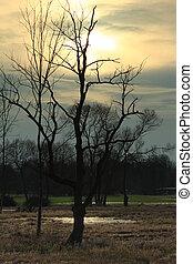 Dead tree in the back light at dusk, Spreewald, Brandenburg,...