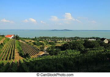 Badacsony - Balaton - Landscape of the beautiful lake...