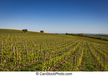 Wine Hills in Northern Italy