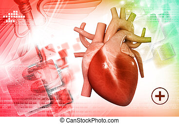 human heart - digital illustration of a human heart in white...