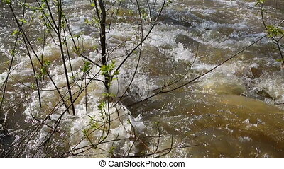 spring flood - water flooded forest