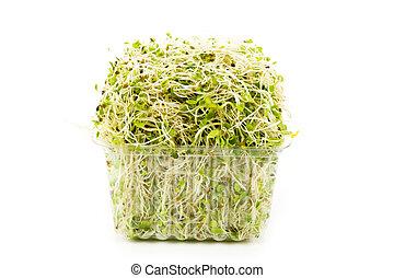 alfalfa, brote