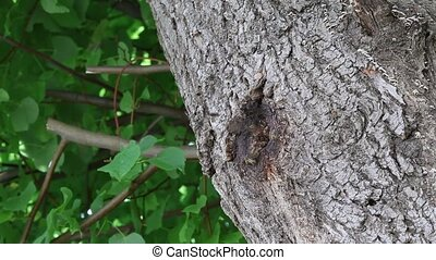 Bees in tree hole