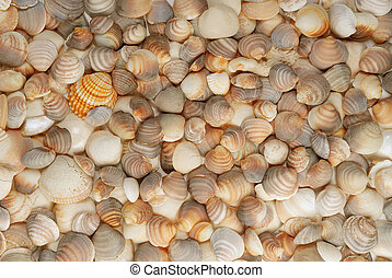 shell background