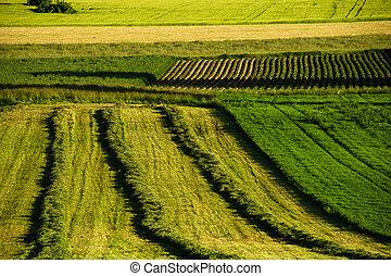 First grass harvest