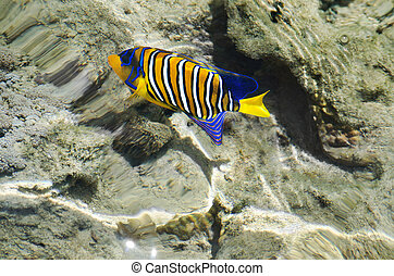 Colorful fish of the Red Sea - Colorful , colorful, exotic...
