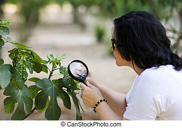 Botanist finding leaf galls on the figs tree - Woman...