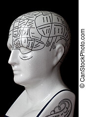 Phrenology head. - Porcelain phrenology head used in...
