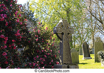 Stone Cross and spring blossom - Old Stone Cross with spring...