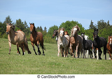 Very various batch of horses running on pasturage in spring
