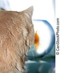 Cat Watching a Gold Fish in a Fishbowl