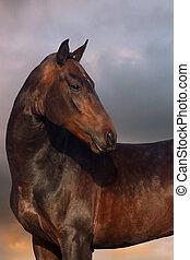 Horse portrait sunset