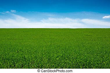 pasto o césped, verde, cielo, Plano de fondo