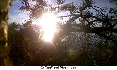 pine on the lake in sun beams at sunset