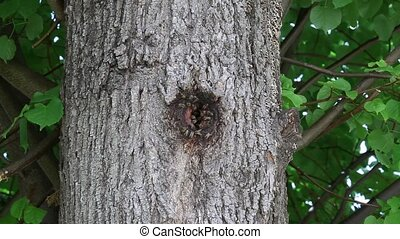 Bees in beehive in tree hole