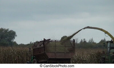 corn field harvesting - seasonal agriculture corn field...