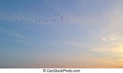 a flock of birds fly at sunset
