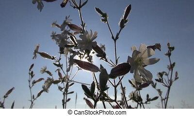 summertime wild flowers in wind