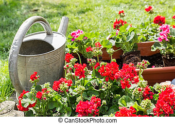 Flower pot with watering can - Old watering can standing...