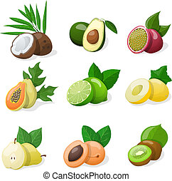Set of exotic fruit Vector illustration EPS10