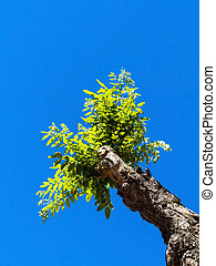 niño, podado, árbol, Manejar