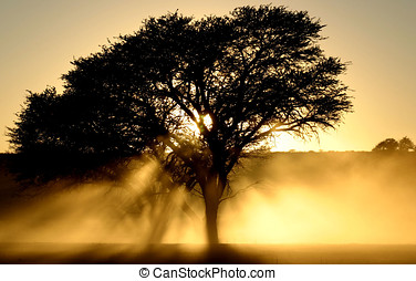 Dusty sunrise thru a African torn tree