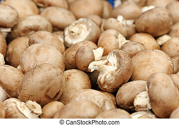 champignon - fruiting bodies of champignon, edible gilled...