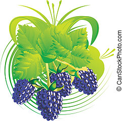 Berries and blackberry leaves - Berries and leaves of a...