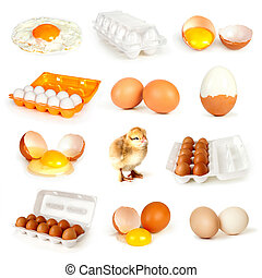 eggs collection isolated on white